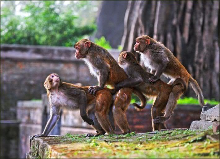 Sjellja e paraardheseve te njeriut, perpara se te beheshin pasardhes te majmunit